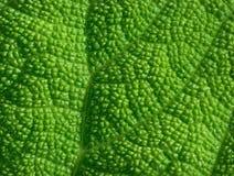 Grob Texturblatt einer tropischen Anlage in der extremen Nahaufnahme Stockbilder