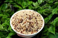 Grober Reis lizenzfreie stockfotografie