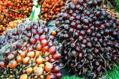 Grobes Palmöl Stockfotos