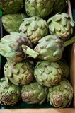 Grocery Store Bin Full of Fresh Green Artichokes Stock Images