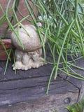 Groda i trädgården Arkivfoton