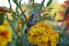 Groda på blomman Royaltyfria Foton