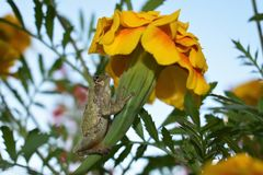 Groda på blomman Arkivfoto
