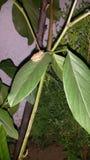 Groda på en leaf Royaltyfria Bilder