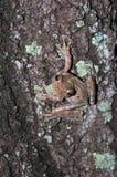 Groda på en Tree Fotografering för Bildbyråer