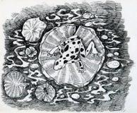 Groda på liljan Arkivfoton