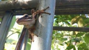 Groda på stålstolpen Royaltyfri Foto