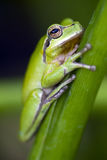grodagreen Royaltyfri Fotografi