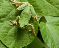 grodagreenleaves arkivfoto