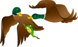 Grodahandelsresanden flyger med två änder royaltyfri illustrationer