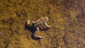 Grodan sitter på undervattens- sand arkivfilmer
