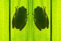 grodatree arkivfoto