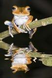 grodatree Fotografering för Bildbyråer