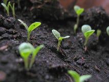 Grodd av växten Arkivfoto