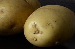Groddar på potatisar Arkivfoto