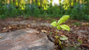 Groddar som växer på en gammal trädstubbe i höst royaltyfri bild