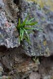 Groddavbrott till och med stenen Arkivfoton