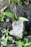 Grodden av blomman växte från under stenen arkivfoto