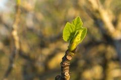 Grodden meddelar ankomsten av våren arkivfoto