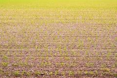 Groddfält Arkivbild
