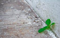 Groddträdet vegeterar i klyftabetong Arkivfoto