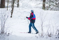 GRODNO, BELARUS - JANUARY 15, 2017. An old man exercises to improve his health by cross country skiing Royalty Free Stock Image
