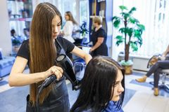 GRODNO, BELARUS -  MAY 2016: master hairdresser coiffeur doing a hairstyle in barber salon for young woman.  stock photography