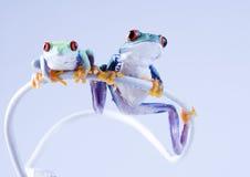 grodor Arkivbild
