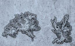 Grodor som skapas av frost på fönstret Arkivbilder