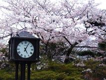grodowa cesky dziedzictwa krumlov sezonu wiosna przeglądać świat Zdjęcie Stock