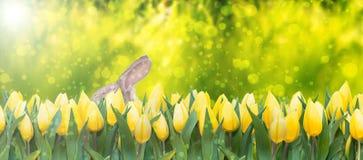 grodowa cesky dziedzictwa krumlov sezonu wiosna przeglądać świat Zdjęcie Royalty Free