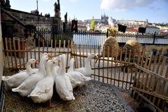 grodowe gąski Prague fotografia royalty free