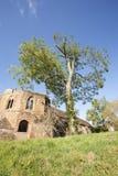 grodowy drzewo obraz royalty free