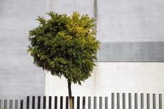 Grodzki drzewo Fotografia Stock