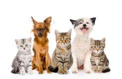 Große Gruppe Katzen und Hunde, die in der Front sitzen Lokalisiert auf Weiß Lizenzfreies Stockfoto