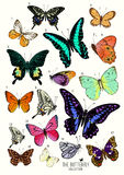 Große Sammlung Schmetterlinge Lizenzfreies Stockfoto