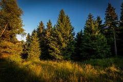 Groef met hoge gras en bomen in de gele zonsondergang dichtbij Cernava en Ramzova in Jeseniky royalty-vrije stock foto's