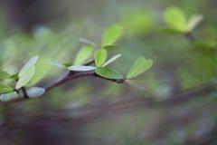 Groei jongelui doorbladert boom op onduidelijk beeldachtergrond stock fotografie