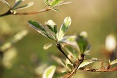 Groei jongelui doorbladert boom op onduidelijk beeldachtergrond stock afbeelding