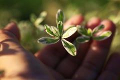 Groei jongelui doorbladert boom op onduidelijk beeldachtergrond stock foto's