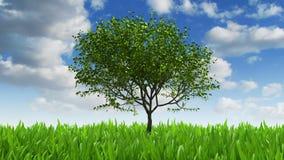 Groeiend boom en gras, 3d animatie royalty-vrije illustratie
