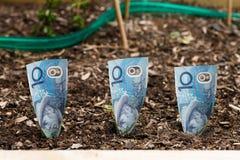 Groeiend geld Stock Fotografie