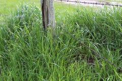 Groeiend gras stock foto's