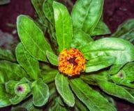 Groeiende bloem stock foto's