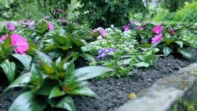Groeiende bloemengrond De camerabeweging maakt het mogelijk om de bloem aan alle kanten van de bloem te zien stock video