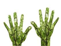 Groeiende handen Stock Foto