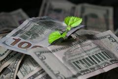 Groeiende investeringen, Stock Afbeelding
