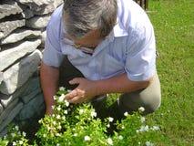 Groeiende jasmijn Royalty-vrije Stock Afbeeldingen
