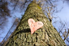 Groeiende liefde Stock Afbeeldingen