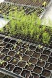 Groeiende Organische plantaardige landbouwbedrijven royalty-vrije stock fotografie